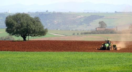 Algérie / Agriculture : réalité et perspectives
