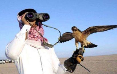 Des braconniers qataris ont chassé l'outarde dans le sud tunisien, reconnaît Samir Taieb