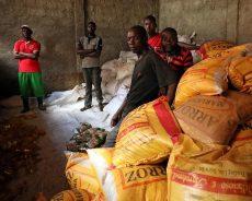 La pauvreté menace encore des régions entières : L'Afrique face au défi de la sécurité alimentaire
