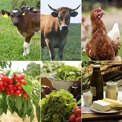 L'Algérie Aléatoire / L'AGRICULTURE
