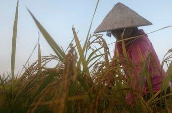 De l'agent orange étasunien au Roundup européen : Le Vietnam poursuit sa lutte !
