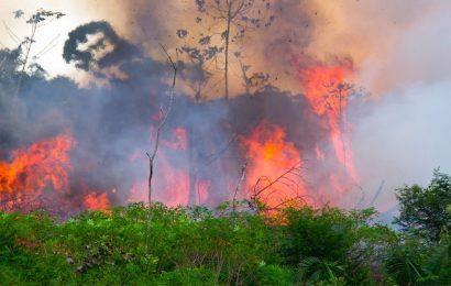 Brésil / Les feux de forêt en Amazonie révèlent la fausseté de la politique capitaliste «verte»