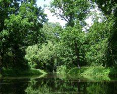 La Terre perd une forêt de la taille du Royaume-Uni chaque année