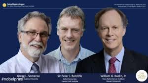 Le prix Nobel de médecine 2019 décerné à William G. Kaelin et Peter J. Ratcliffe, Gregg L. Semenza pour leurs travaux sur l'oxygénation des cellules