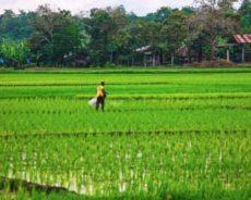 Philippines / Réflexions sur l'état des luttes paysannes