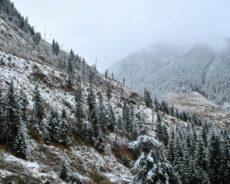 Meurtres et pots-de-vin, la mafia roumaine du bois se radicalise