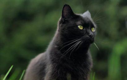 Chine / Des scientifiques découvrent à Wuhan de nombreux chats atteints du Covid-19