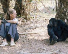Dr. Jane Goodall : « Nous sommes arrivés à un tournant décisif dans notre relation avec le monde naturel »