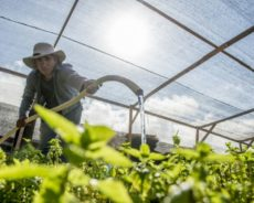 Chili : faire pousser des légumes dans le désert le plus aride du monde