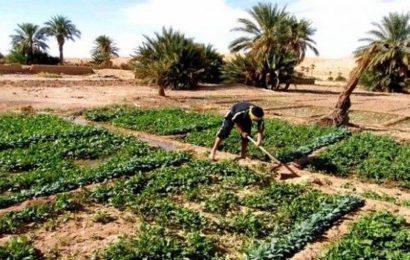L'agriculture saharienne algérienne : défis et perspectives