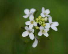 Les nanoplastiques présents dans le sol nuisent aux plantes