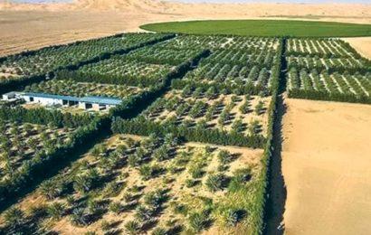 À FORT POTENTIEL AGRICOLE, L'ALGÉRIE EN QUÊTE DE SÉCURITÉ ALIMENTAIRE : Le désert agraire