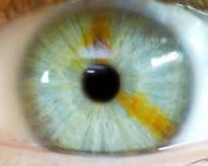Ingénierie sociale – Le monde est sous hypnose