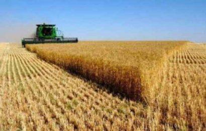 Algérie / Grosse manoeuvre au ministère de l'Agriculture pour placer l'alimentation de base, blé et lait, sous la coupe de groupes d'oligarques : projet de privatisation des activités de l'OAIC et de l'ONIL
