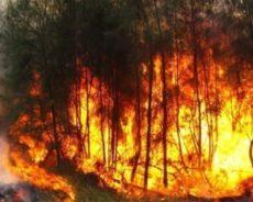 Feux de forêts, l'immense drame : L'Algérie meurtrie